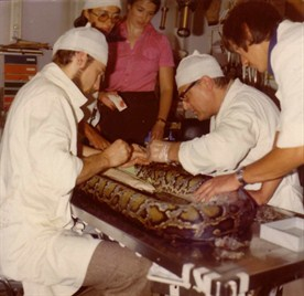 Dr . Wieselthaler Sen , A Vet Is Operating On A 6 M Long Python